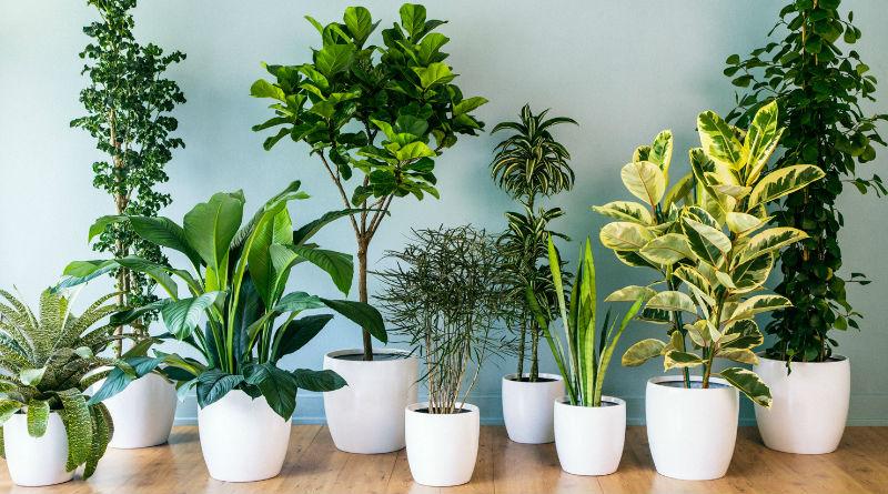 8 Plantas de Interior Perfectas para Oficinas