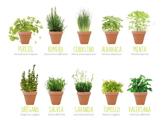 plantas aromaticas casa