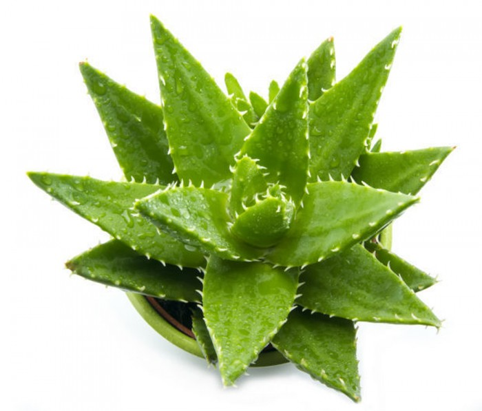 plantas beneficiosas