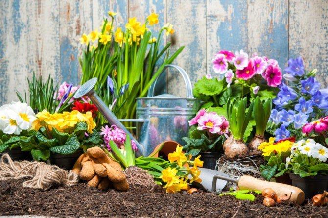Consejos de Jardinería para Novatos – Parte 2
