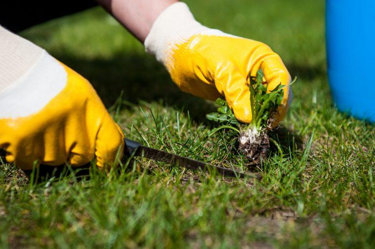 eliminar malas hierbas del jardin