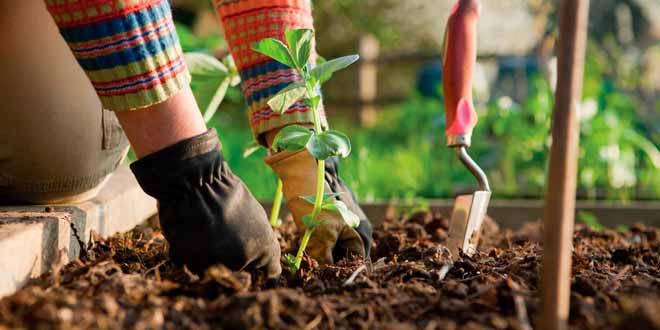 jardineria para novatos