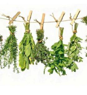 plantas-medicinales-beneficiosas-para-la-salud