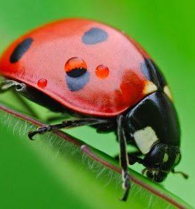 insectos beneficiosos para el jardin