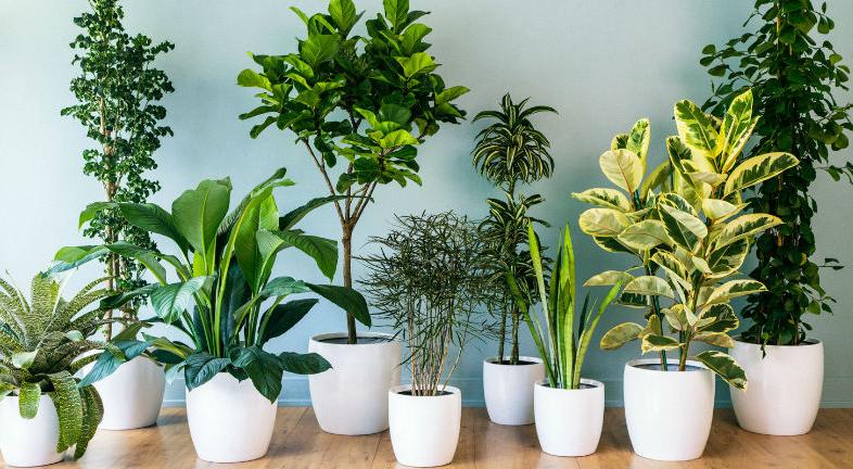 9 Plantas de Interior que sobreviven con pocos cuidados