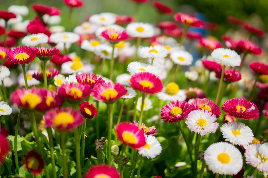 productos ecologicos para el jardin o el huerto