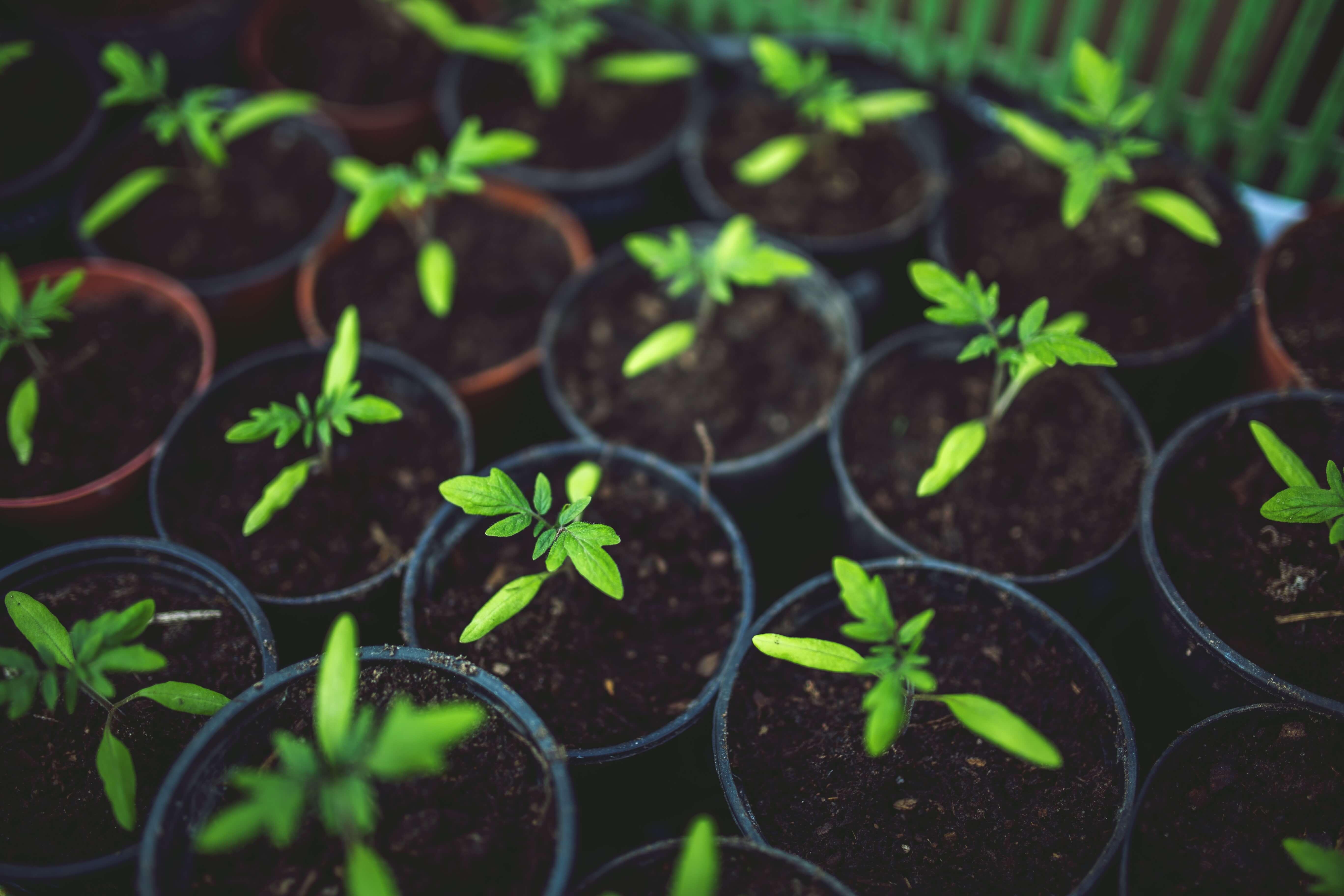 Trata tu Jardín o tu Huerto con Productos Ecológicos