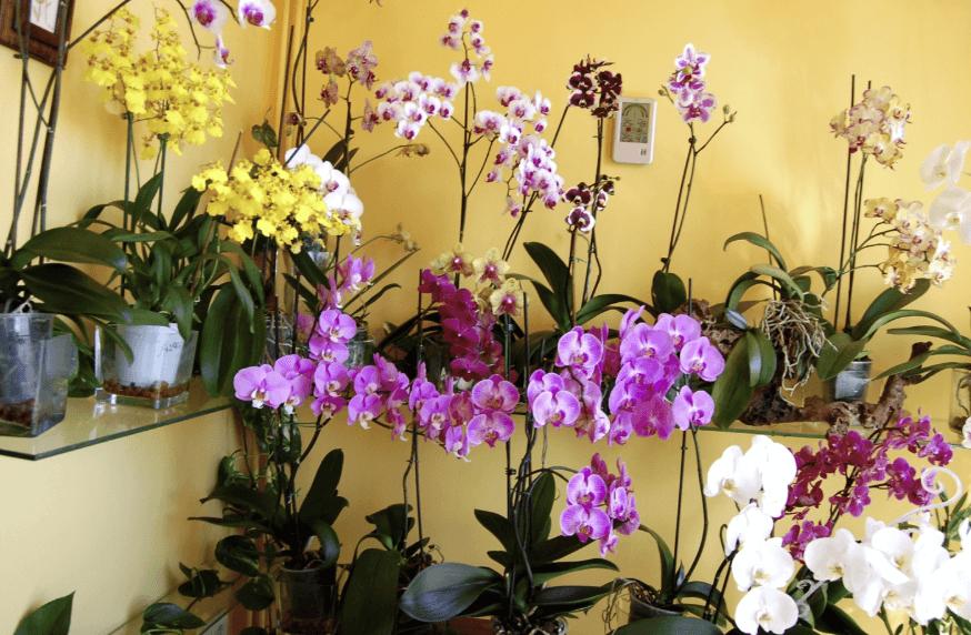 Consejos para el cuidado de Orquídeas de Interior