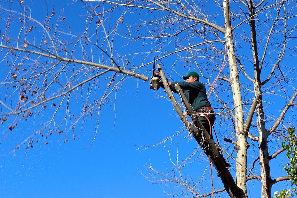 Aprende a Podar un árbol