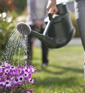 regar las plantas