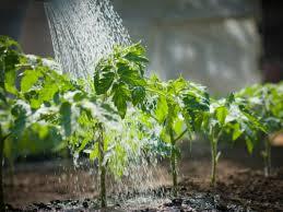 sistema de riego en el jardín