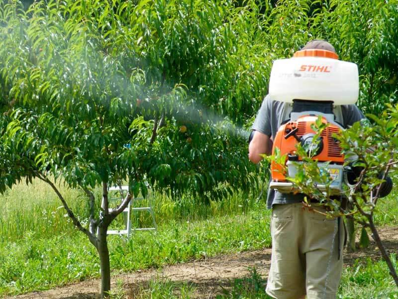 tratamientoS fitosanitarios para jardines