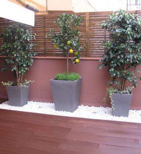 arboles frutales en terraza