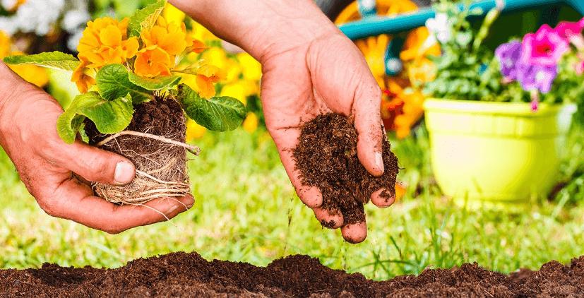 Aprende a plantar flores