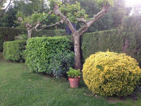 arboles arbustos y plantas en jardines