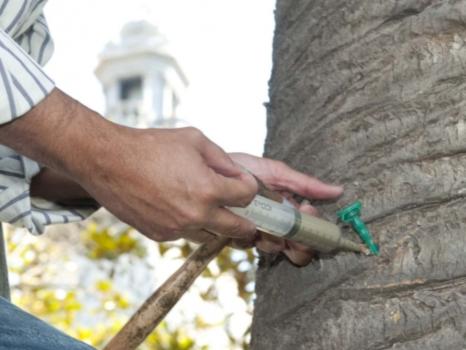 tratamientos fitosanitarios palmeras