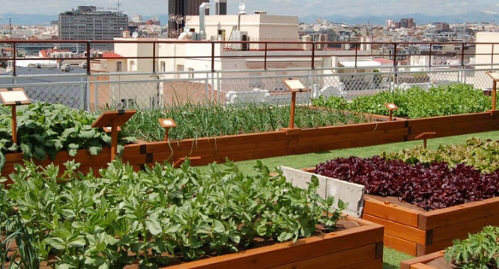 Verduras y frutas a cultivar en invierno si tengo un huerto urbano
