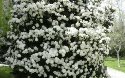 Plantas de inverno para el jardín o terraza