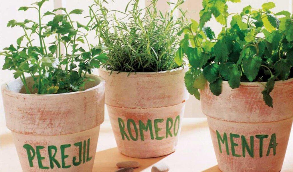cuidar de las plantas aromáticas
