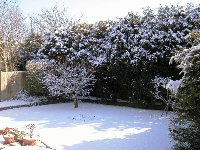 ¿Preparamos el jardín para el invierno?