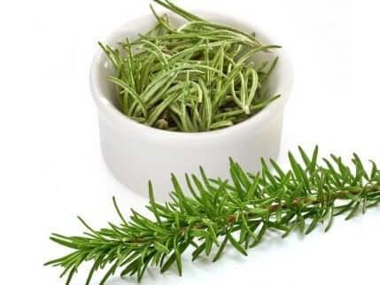 romero planta aromática