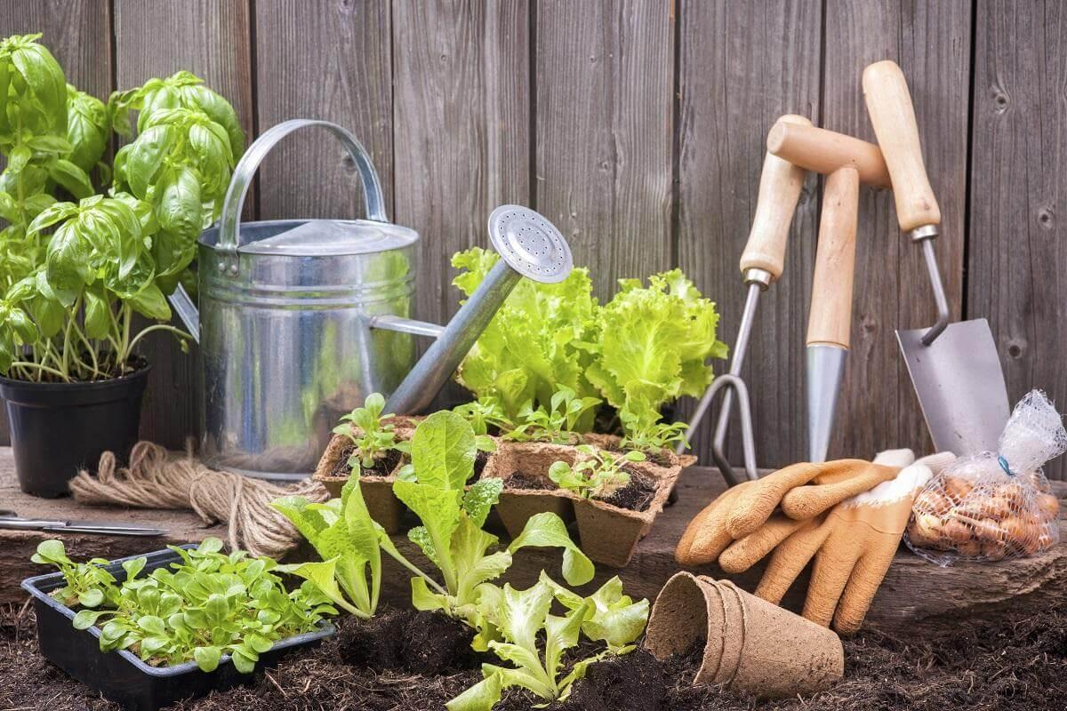 métodos naturales para abonar el jardín