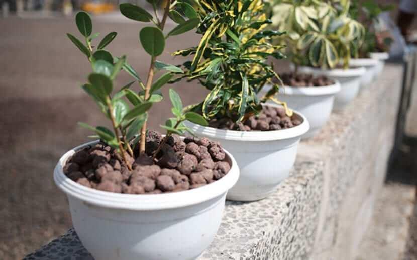 Ventajas de cultivar plantas en arlita