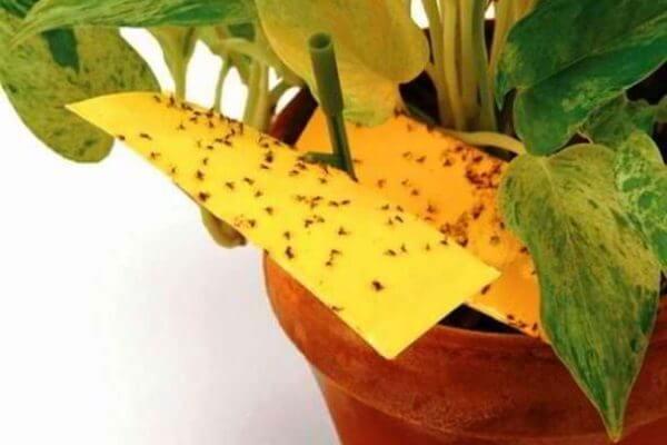 Trucos para eliminar los insectos de las plantas