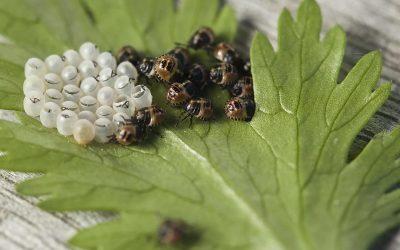 Insectos perjudiciales para el jardín